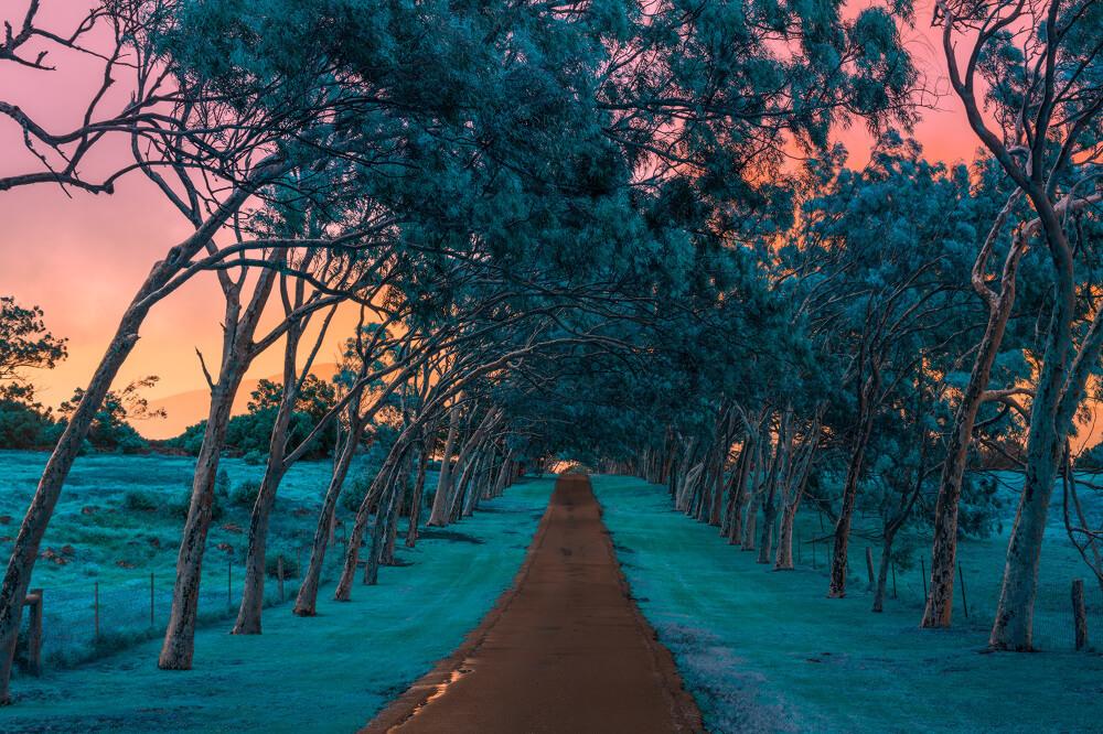 Hawaï et ses couleurs par Mischelle Moy